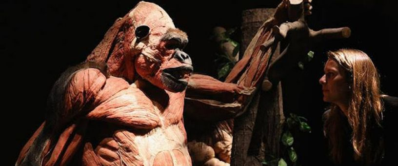 BODY WORLDS ANIMAL INSIDE OUT IN SEVILLA