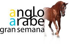 Tolle Woche des Pferdes Anglo-Arabe
