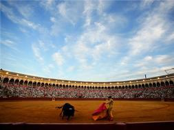 Bulls in San Miguel Fair of Seville